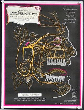 trigeminal nerve types chart: Chisholm larsson gallery over 60 000 original vintage posters
